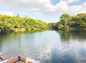 井の頭公園の池の写真