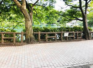 井の頭公園の写真