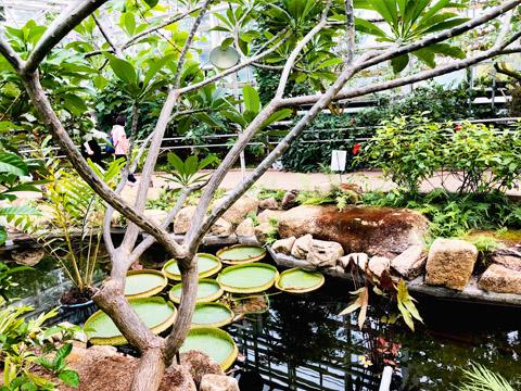 神代植物公園の温室内の写真
