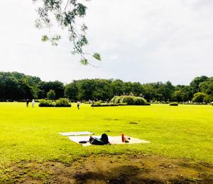 芝生とシートの写真