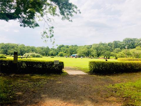 神代植物公園の芝生広場