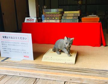 夏目漱石の猫の写真