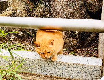 挿入写真「江の島の野良猫」