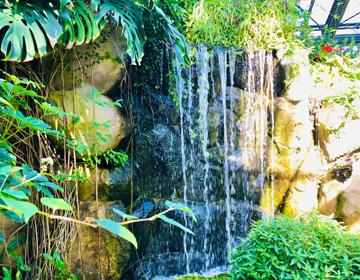 秘密の庭の品評会「熱帯植物館の滝」写真
