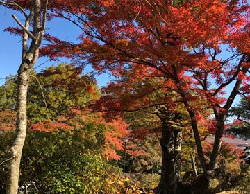 秘密の庭の品評会「紅葉①」写真