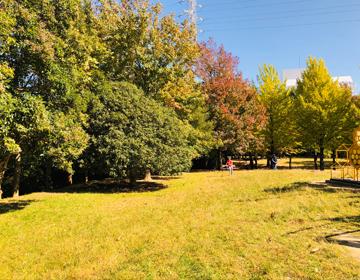 公園で紅葉がはじまりつつある写真