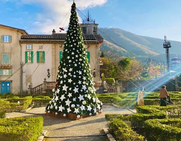 星の王子さまと導きのダイス「クリスマスツリー」の写真