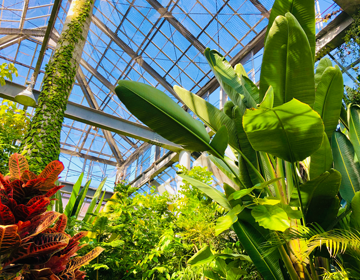 秘密の庭の品評会「熱帯植物館」写真