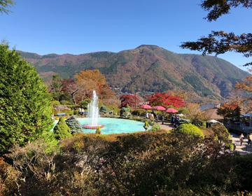 秘密の庭の品評会「箱根の山並み」写真