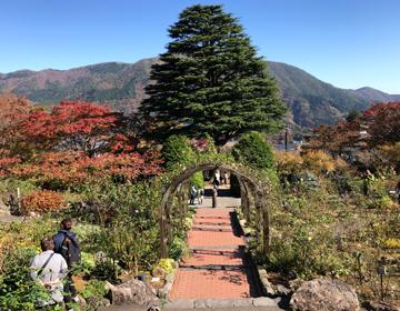秘密の庭の品評会「ヒマラヤ杉遠景」写真