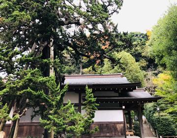 あじさい甘味堂(鶴岡八幡宮の森)写真
